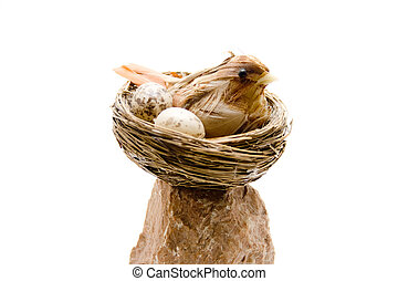 Bird in the nest on stone