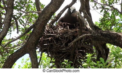 Bird in the nest on tropical tree in a rain forest.