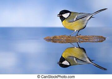 Bird in the water.