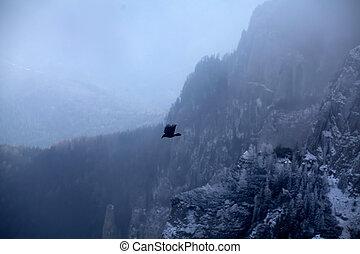 Bird in winter