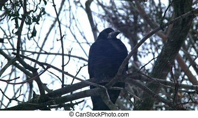 Bird is Sitting on a Bare Branches Tree, Winter, Cold Weather