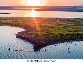 Bird island on a river in a reserve in Russia