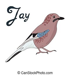 Bird jay vector illustration - Bird jay cartoon doodle hand...