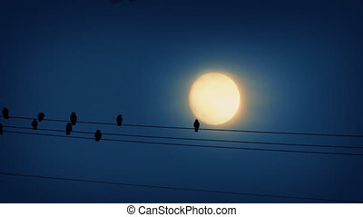 Bird Lands On Wire In Front Of Moon