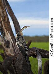 Bird life in Kakadu National Park, Australia