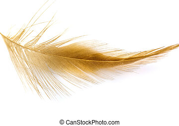 Bird light brown feather isolated