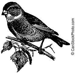 Bird Linnet