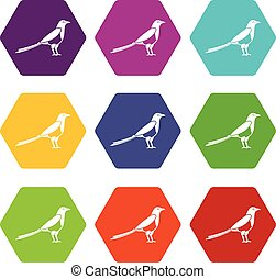 Bird magpie icon set color hexahedron