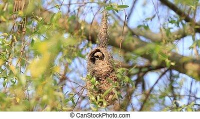 bird makes an unusual nest , springtime