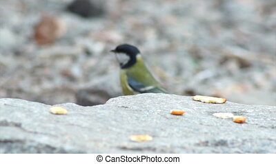 Bird nature wild beak