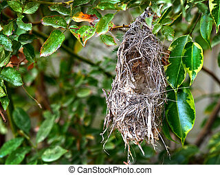 Bird nest hanging on a tree
