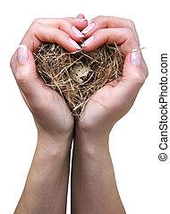Bird nest in hands