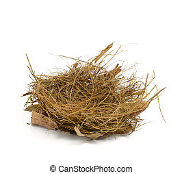 Bird nest isolated