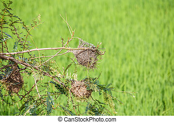 Bird nest on a tree