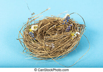 bird Nest on blue background. Studio Photo