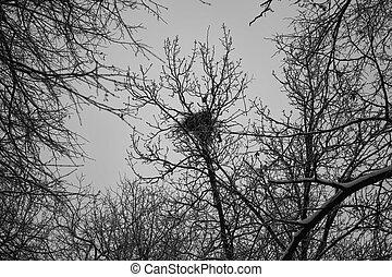 Bird nest on the tree