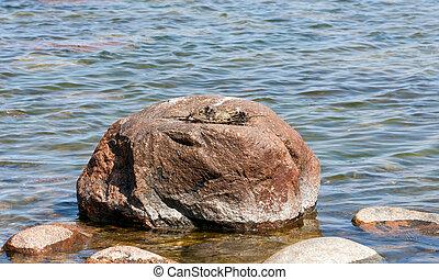 Bird nest with eggs on big rock