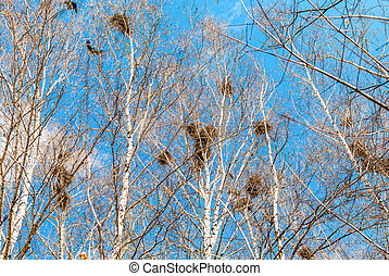 Bird nests on the tree branches