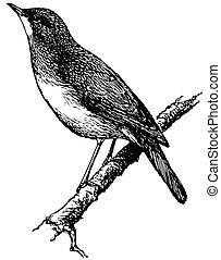 Bird Nightingale on the branch