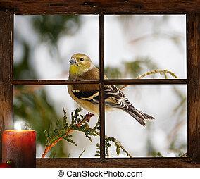 bird., noël