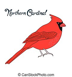 Bird northern cardinal vector illustration