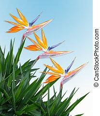 Bird of paradise border - Image and illustration composition...