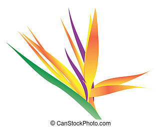 An illustration of a bird of paradise flower over white.
