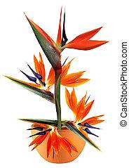 bird of paradise flower in pot - floral arrangement of...