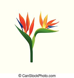 Bird of paradise flowers vector Illustration isolated on a...