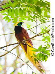 Bird of Paradise on a tree - Bird of paradise in the jungle....