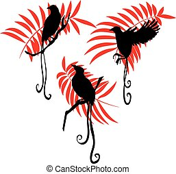 Bird of paradise silhouette  vector illustration set