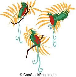 Bird of paradise vector illustration set