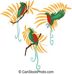 Bird of paradise vector illustration set