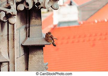 Bird of prey in the city.