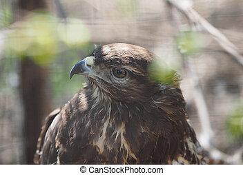 bird of prey in the Zoo