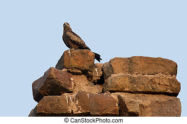 Bird of prey resting on the top of a old stone wall