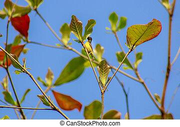 Bird on a branch, blue background.