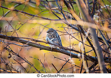 Bird on a branch in the autumn forest
