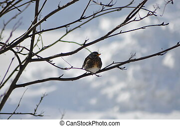 Bird on a branch in winter