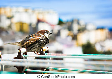 Bird on a clothesline with city background