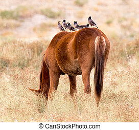 Bird on a horse