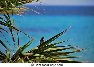 bird on a palm tree and sea
