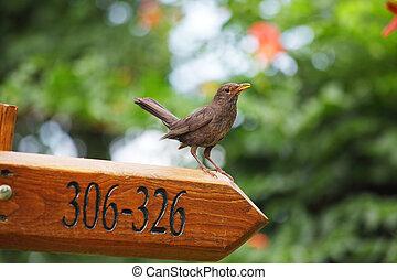 bird on a signpost