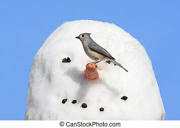 Bird On A Snowman - Tufted Titmouse (baeolophus bicolor) on ...