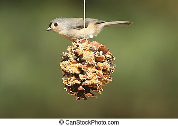 Bird On A Suet Feeder - Tufted Titmouse (baeolophus bicolor...