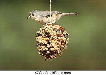Bird On A Suet Feeder - Tufted Titmouse (baeolophus bicolor)...