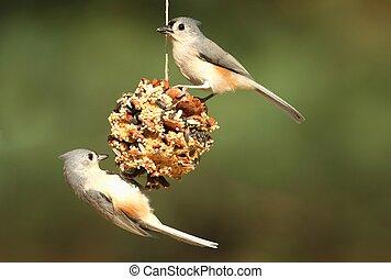 Bird On A Suet Feeder