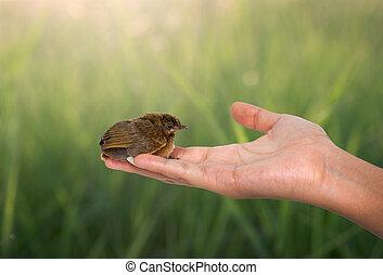 bird on a women hand and nauute background