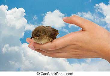 bird on a women hand