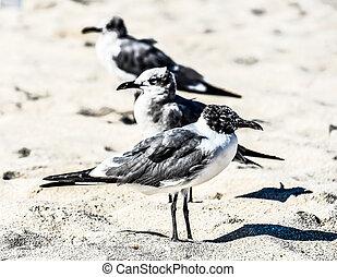 bird on beach, photo as a background